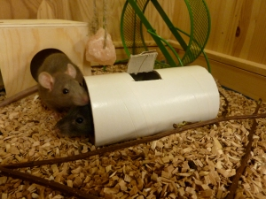 Rotter leker i rør