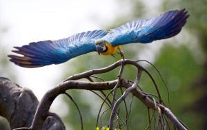 Ara fra Weltvogelparken